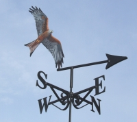 Red Kite in flight, painted,
