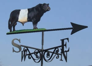 Belted Galloway Painted